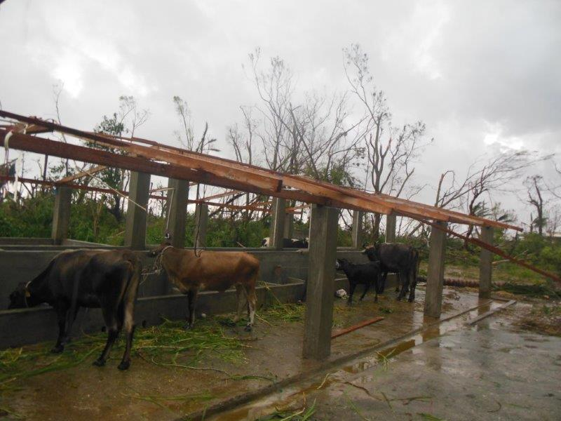 10-New-cow-stable-roof-gone-completely